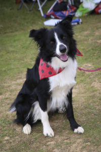 Read more about the article Fun Dog Show