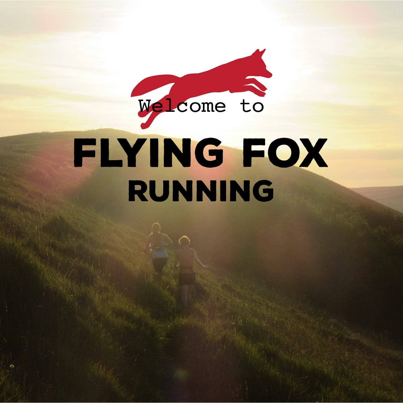 Read more about the article Flying Fox Running